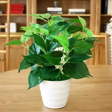 绿萝吊兰含盆 室内绿色盆栽植物 可水培 净化空气吸甲醛 适合摆放办公